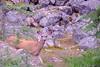 Hite Tailed Deer doe