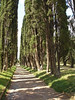 One of the tree lined walkways in and around Hadrain's Villa in Rome.