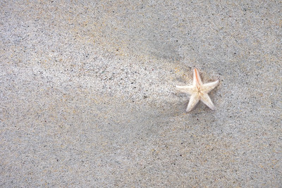 Light Starfish