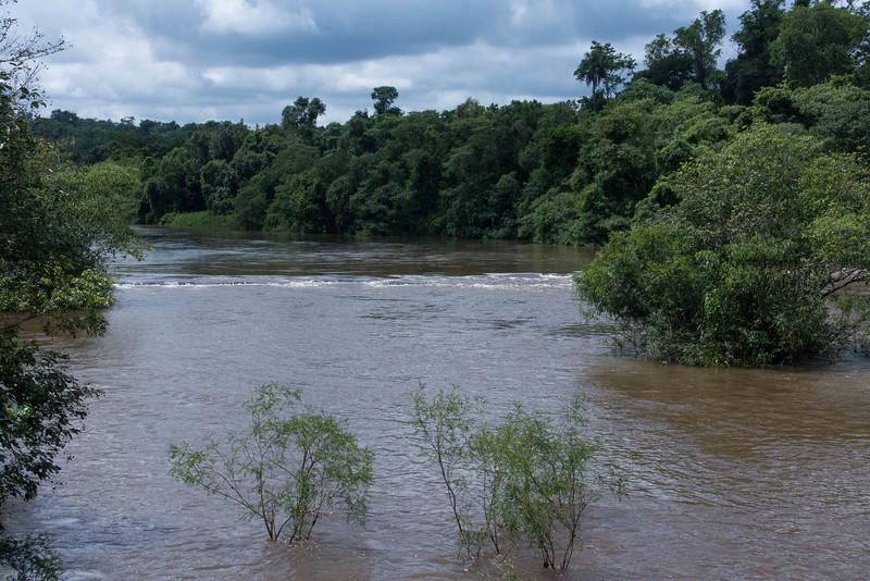 A quiet stretch of the Iguazu River through the jungle just above the falls.