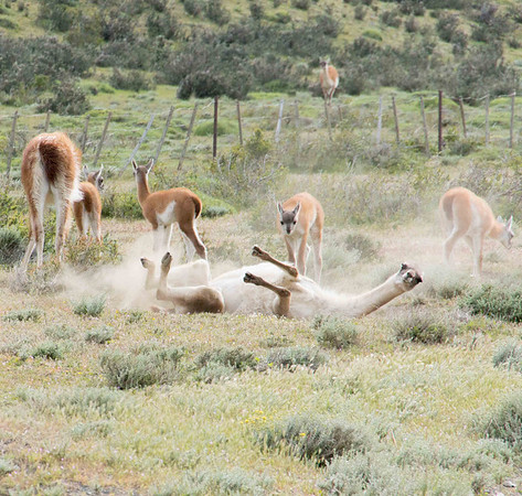 Patagonia Flora and Fauna