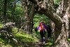 Walking through the Nothofagus forest on the trail from H. Mirador del Paine to Lago Toro