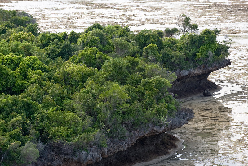 Approximately 90% of Chumbe Island is covered by one of the last remaining pristine 'coral rag' forests in Zanzibar. [Chumbe Island]