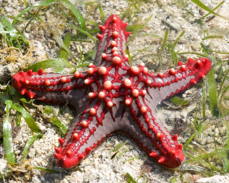 Brilliant sea star.