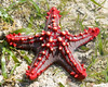 Brilliant sea star.