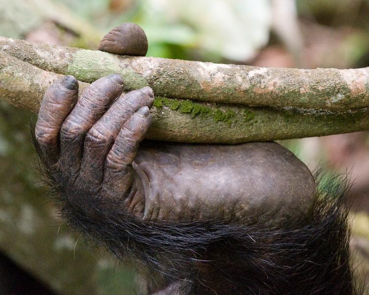 Chimp foot.