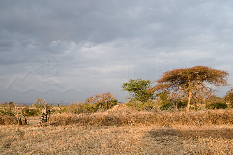 Entrance to a Masai boma compound.