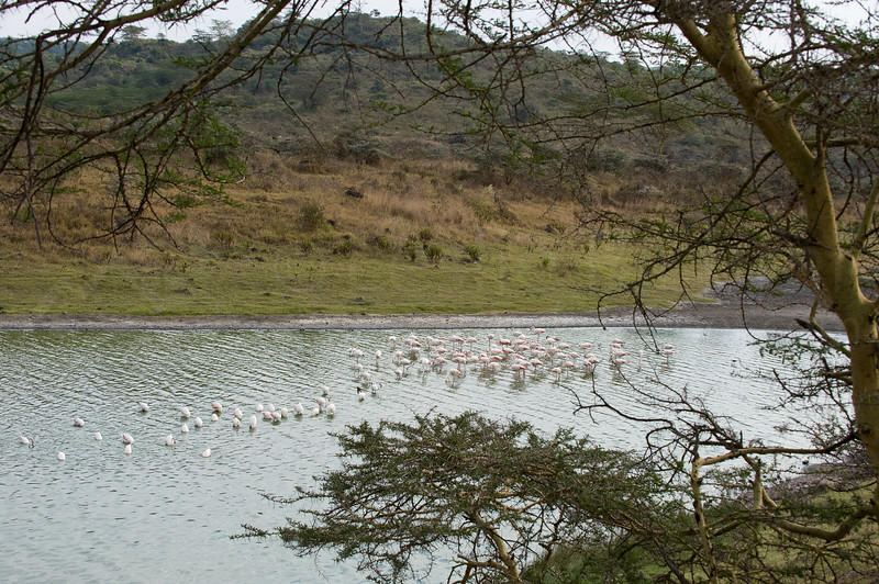 Flamingos on Big Momella Lake in Arusha National Park.