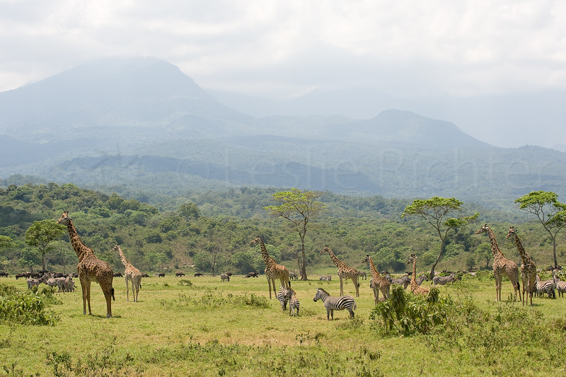 Arusha national park with Mt. Meru in the background.