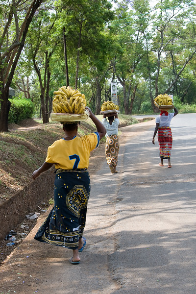Women taking bananas to market.