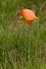 Unidentified flower in the field.