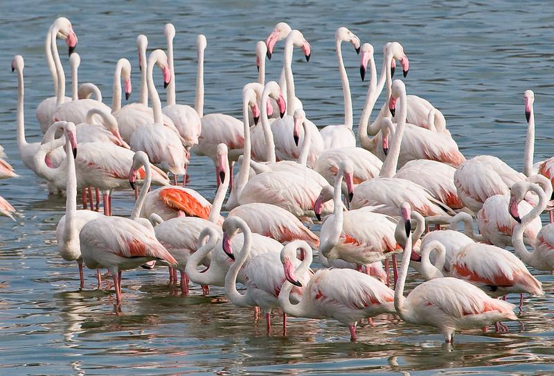 Flamingos at Big Momella Lake in Arusha National Park.
