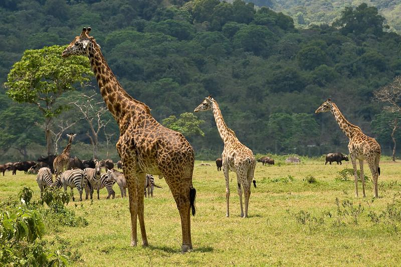 Arusha National Park.