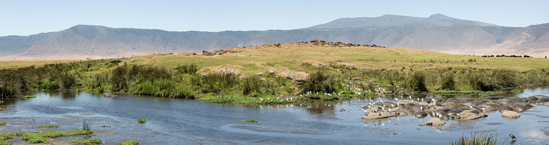 Ngorongoro crater watering hole pano