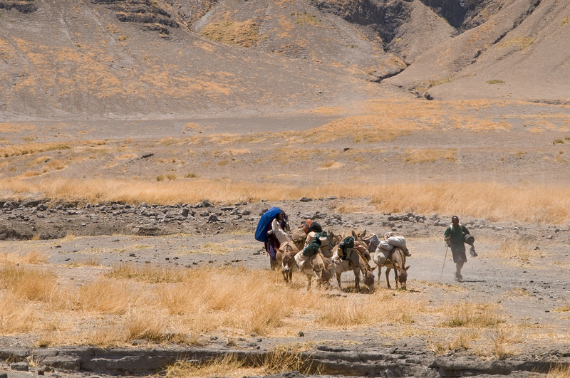 The donkeys, their Masai owners, and our cook near the end of the trek.  The Masai and the donkey's unload and then head back up the hills to return to their village.