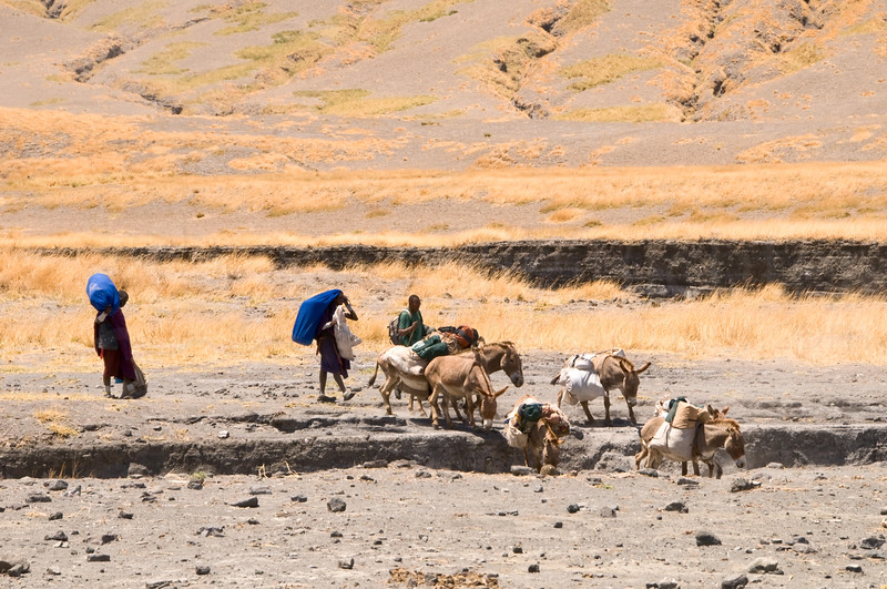 The donkeys get cross the dry river bed.