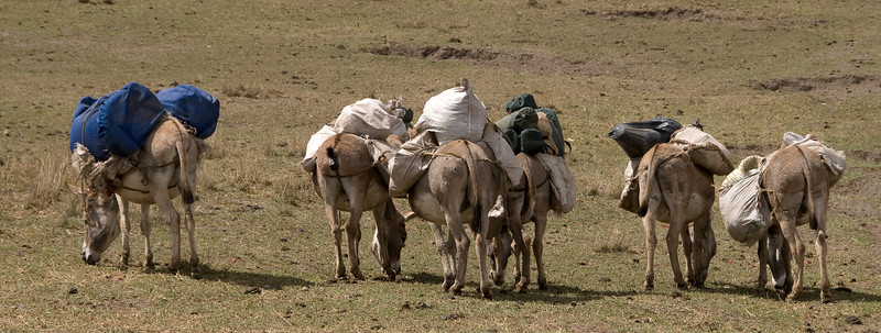 The donkeys carrying our camping equipment, food and water get a short break in Nayobi.