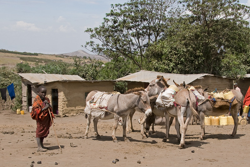 A young boy  with donkeys in Nayobi.