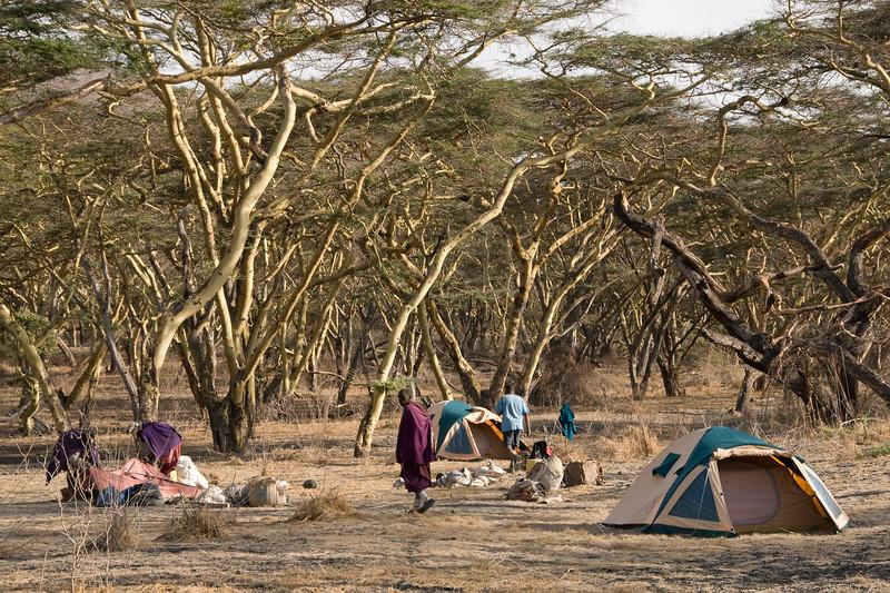 Acacia camp.