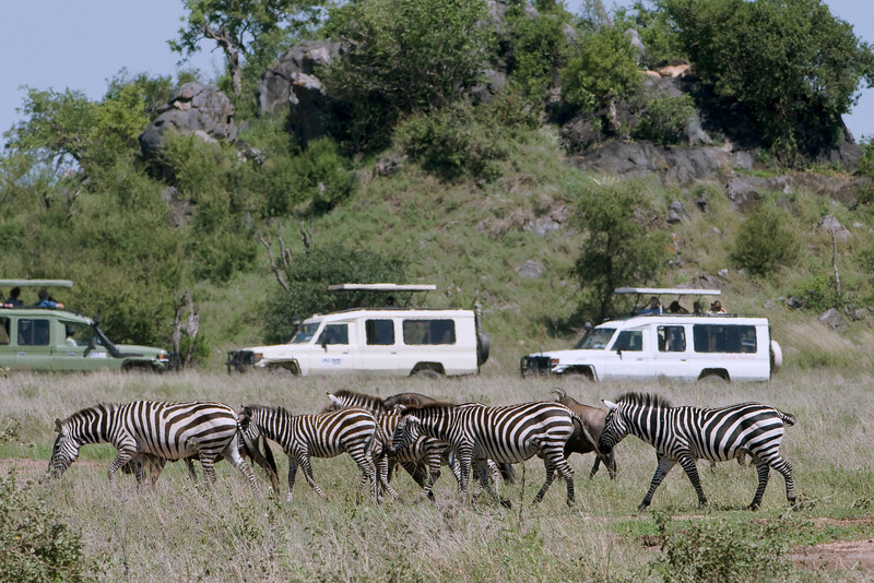 Tourist in safari vehicles look for lions in the rocks.