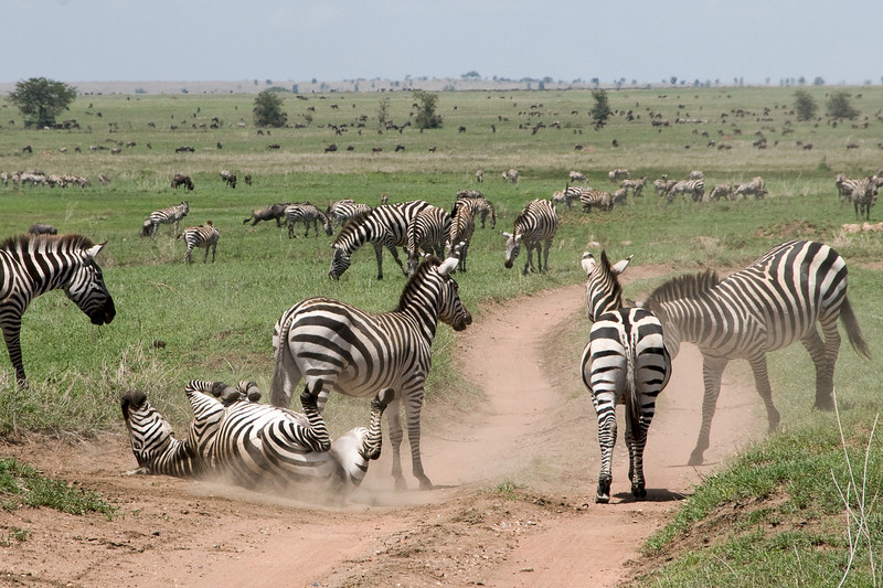 No deet -- roll in the dirt - there's no better natural insect repellent (if you're a zebra).