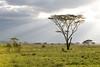 The Serengeti.