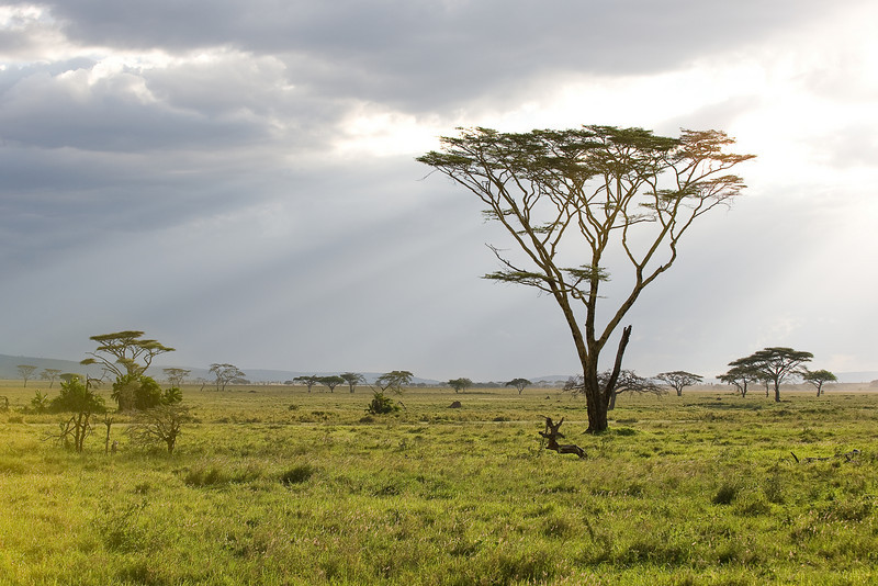 The Serengeti.