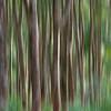 Forest Thailand