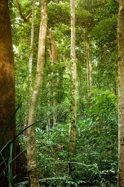 Khao Lak Forest