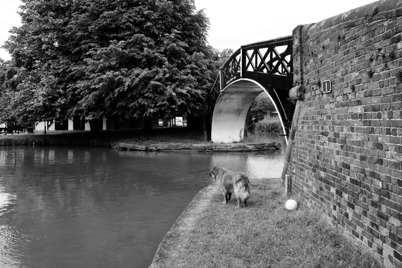Dog Taking A moment To watch The Canal