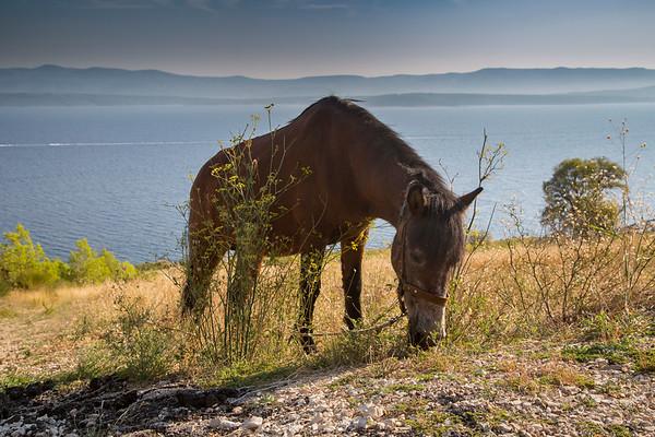 Altes Pferd  - Old horse