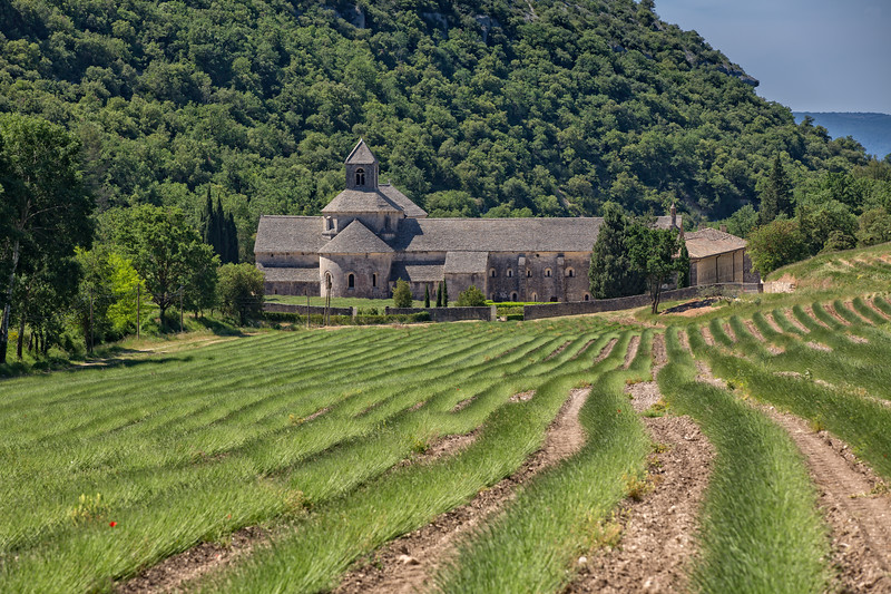Abbey with lavender fields