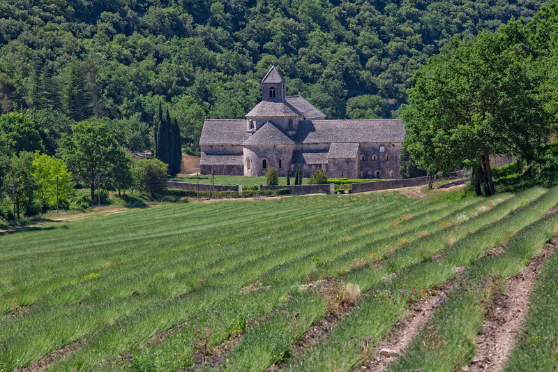 Lavender fields of Senanque Abbaye