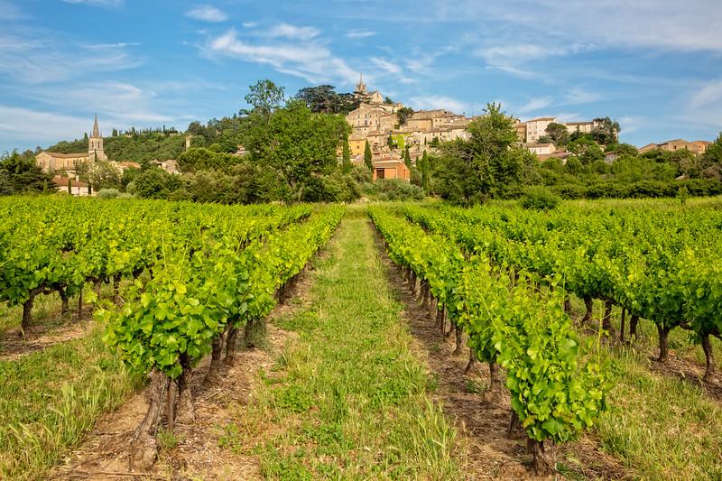 Vineyard in Bonnieux