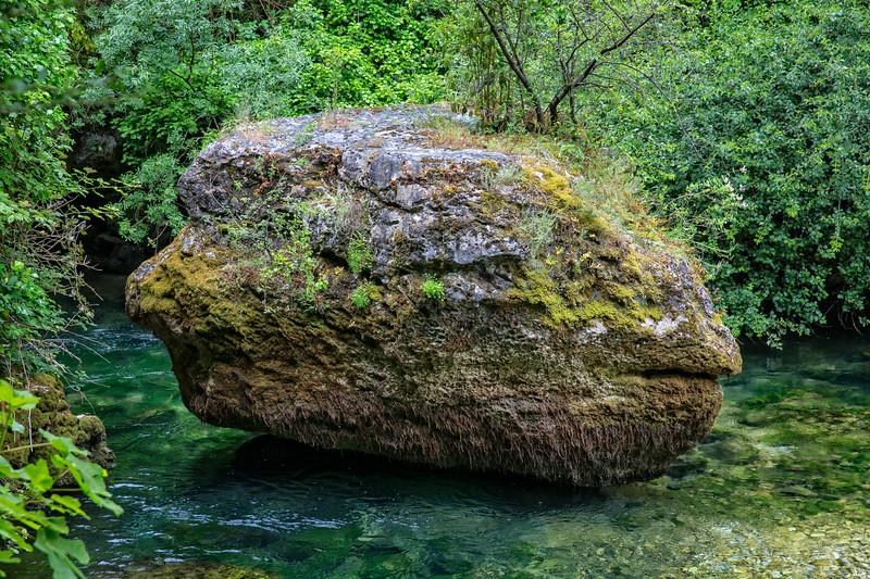 The big rockfish