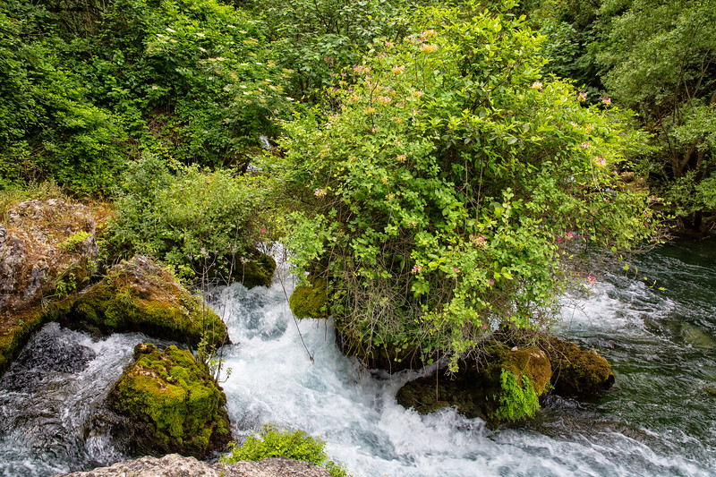 Rocks and vegetation on the River Sorgue