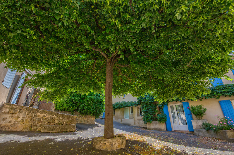 Under the lime tree