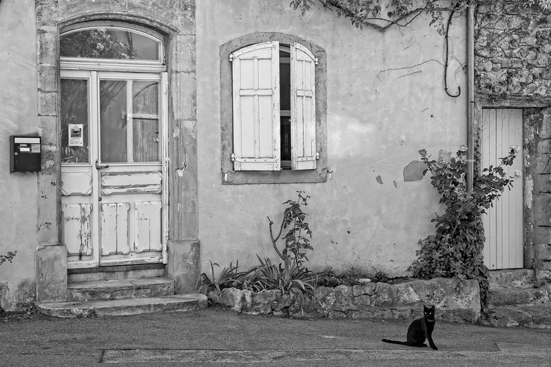A lonely cat