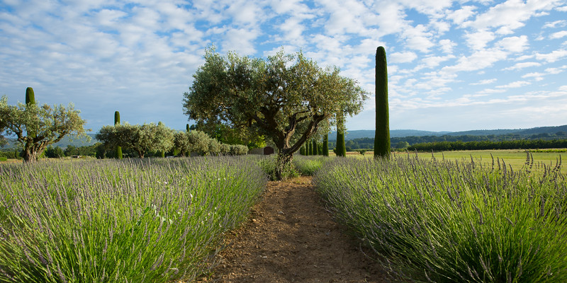 Agriculture near Maubec