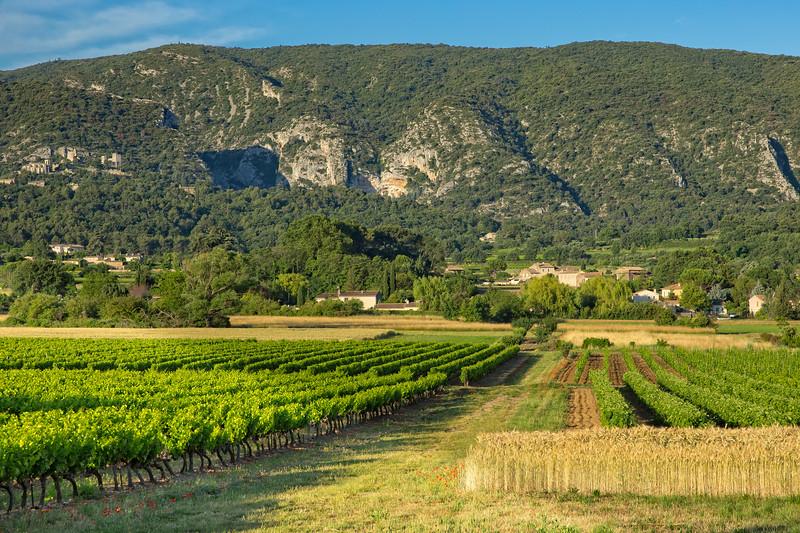 Vineyard in the region of Luberon