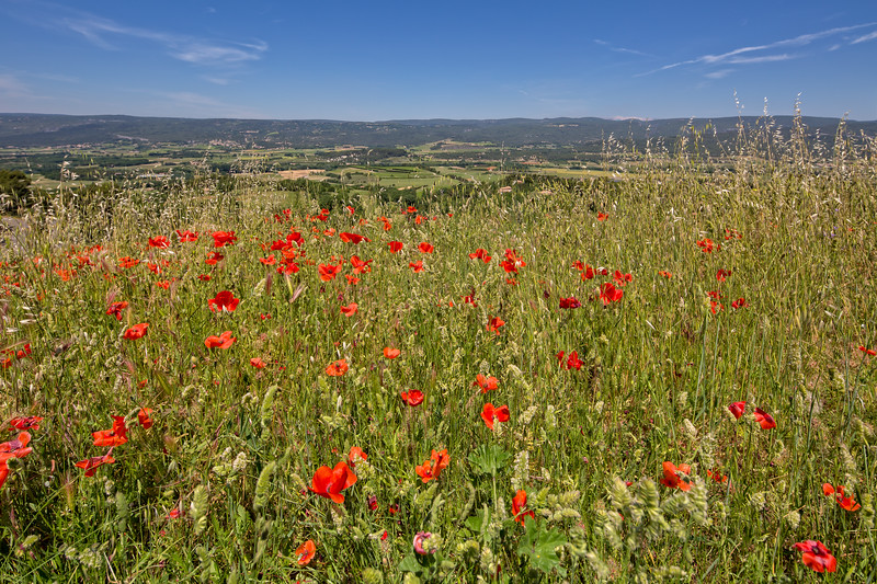 Wildflowers in Provence