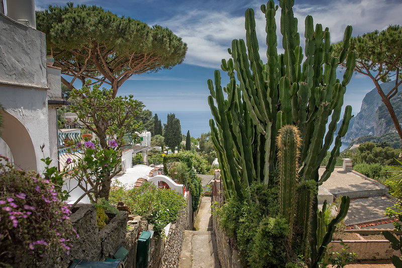 Scenic footpath in Capri decorated with cacti, trees and flowers
