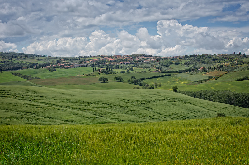 Green wheat field and cypress trees near San Quirico d'Orcia