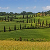 La Foce - cypress tree lined road in Val d'Orcia