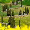 Moltalcino