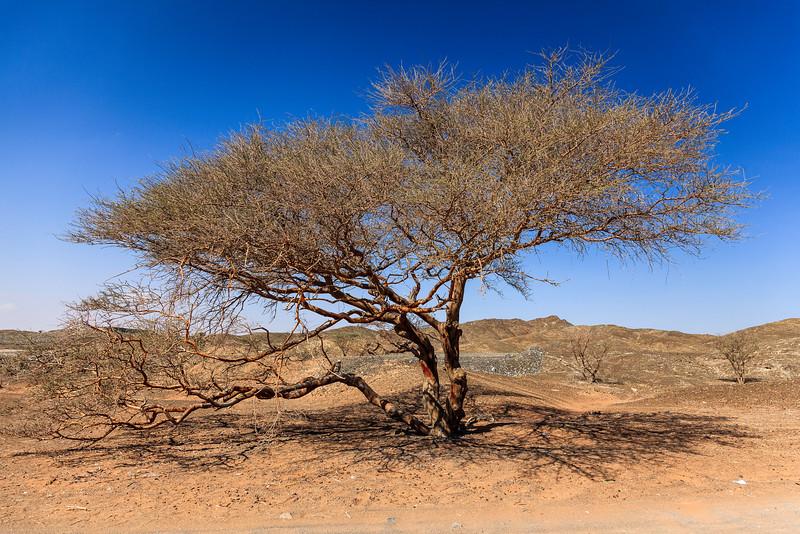 A lonely tree in Wadi Maidaq