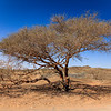 A lonely tree in Wadi Maidaq