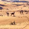 Donkeys in the desert in the morning sun
