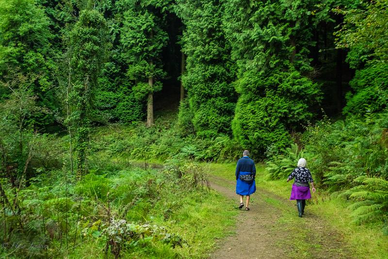 A walk through Newent Wood