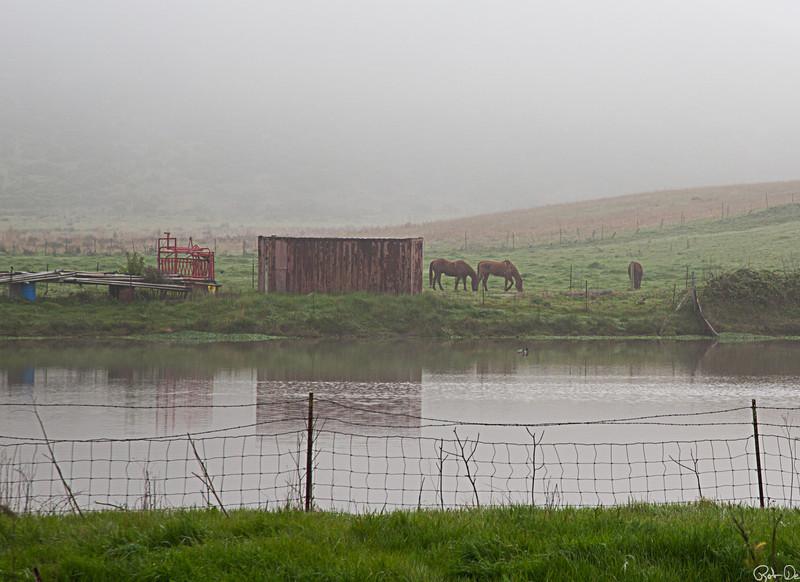 Horses at Half Moon Bay